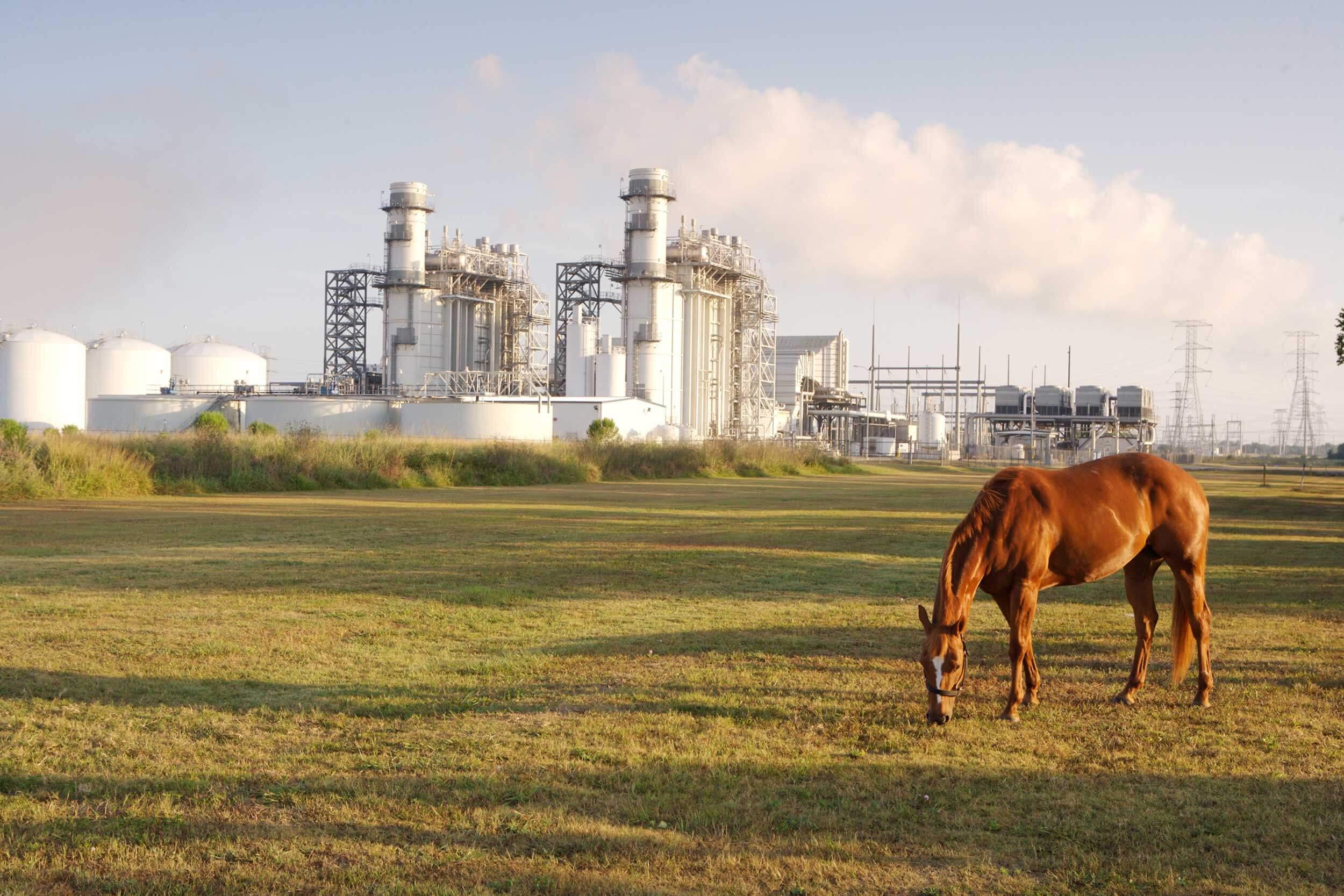 A horse grazes near Calpine's Brazos Valley Power Plant in Richmond, Texas.