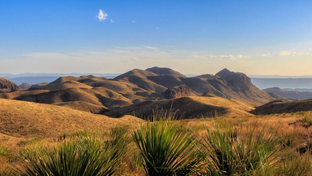 Leafy plants fill the foreground while large mountains sit behind them at Big Bend National Park in West Texas.